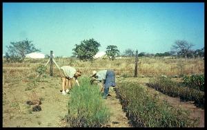 Working in the tree nursery 1990