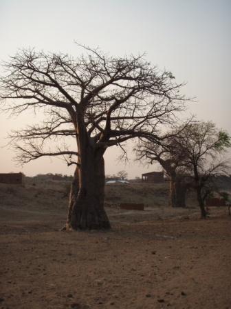baobob1