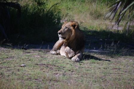 lion-paw